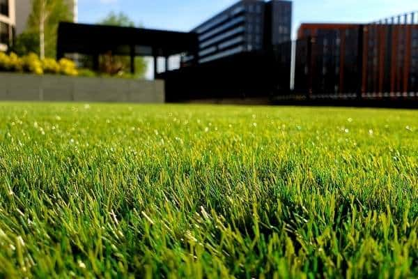 A picture of a green lawn with a building in the background