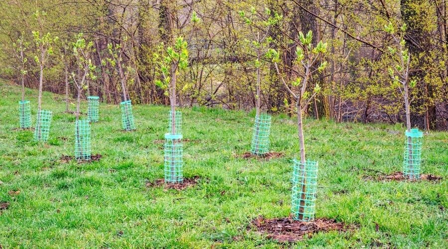Picture of newly planted trees