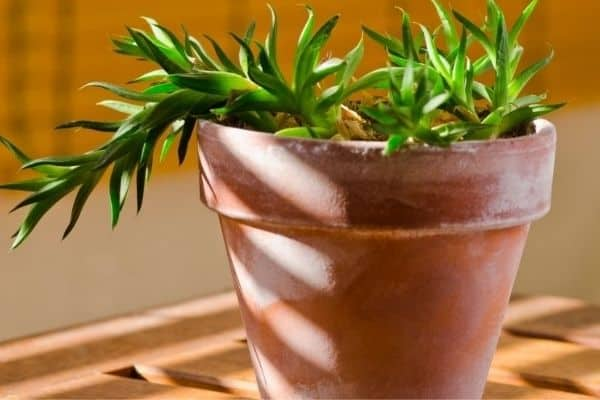 Picture of a houseplant growing towards sunlight on a terrace
