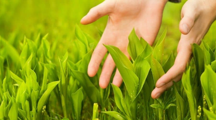 Picture of hands touching plants