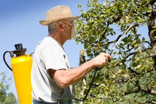 Picture of a gardener uisng a sprayer for applying insecticides