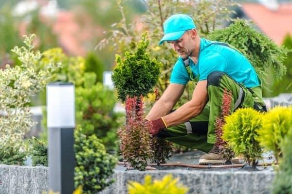 Picture of a professional gardener finishing a backyard garden
