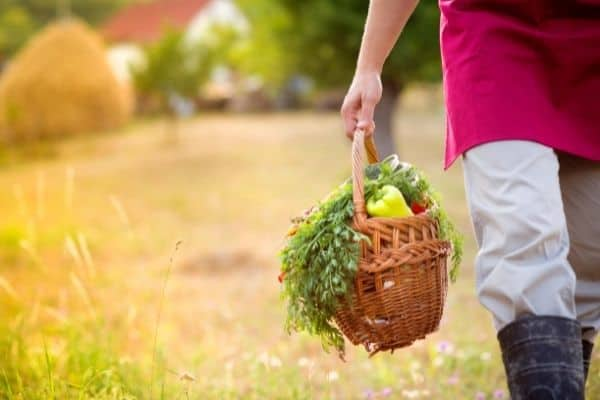 Picture of a manholding garden fresh harvests in a basket