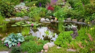 Picture of a garden pond with lots of plants
