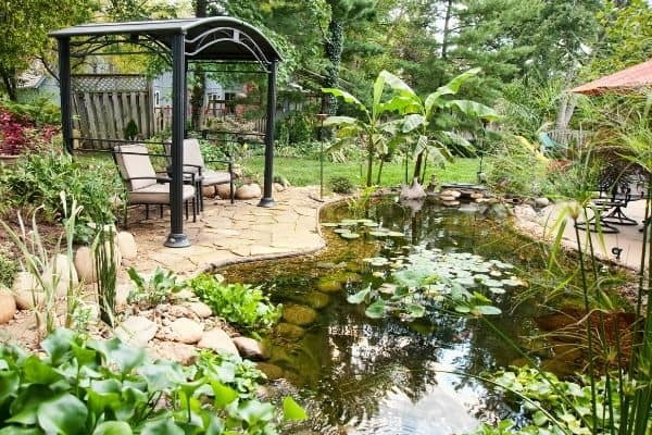 Picture of a backyard garden pond