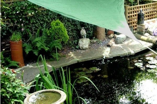 Picture of a garden pond in shade