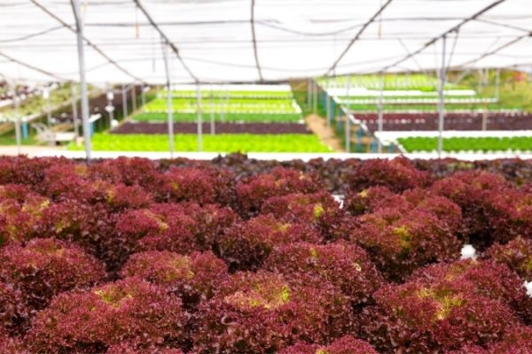 Picture of hydroponics growing method
