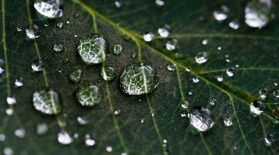 Banner picture of a green leaf with water droplets on it