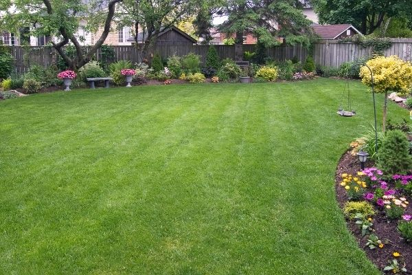 picture of a backyard