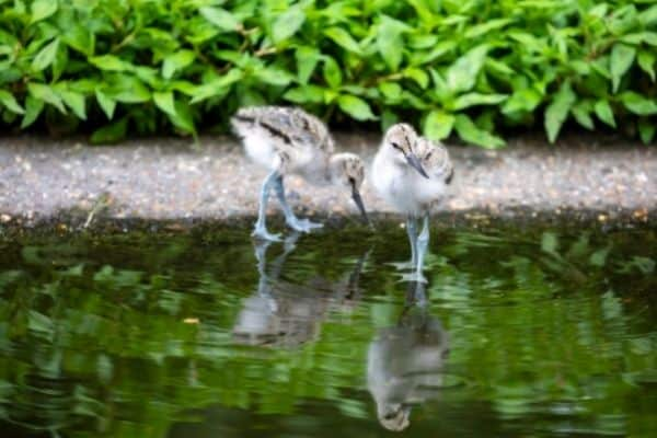 picture of  birds in ponds