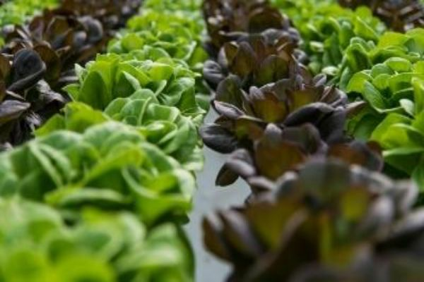 picture of variety of crops in greenhouse