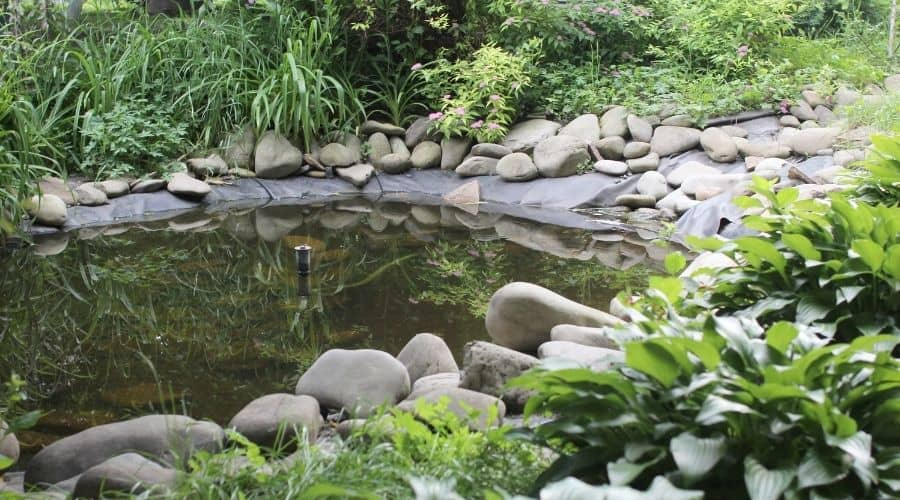 picture of a garden pond