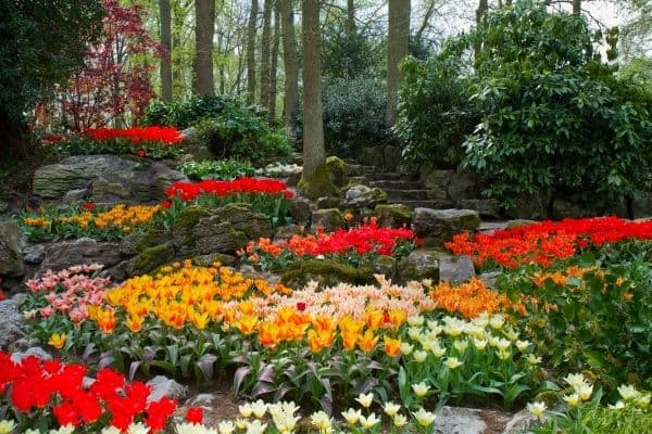picture of a garden