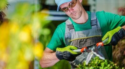 Picture of a gardener trimming garden plants