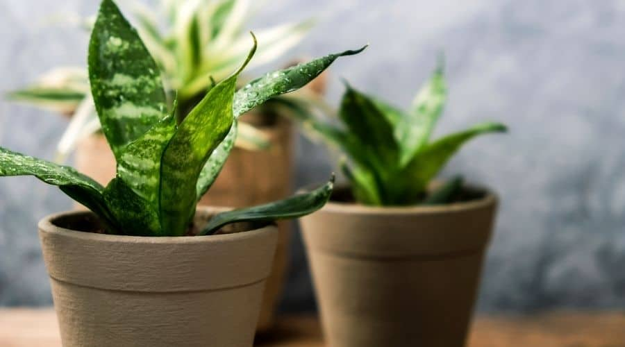 picture of house plants in pots
