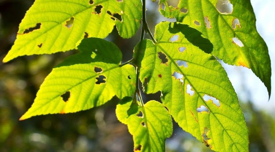picture of leaves with holes