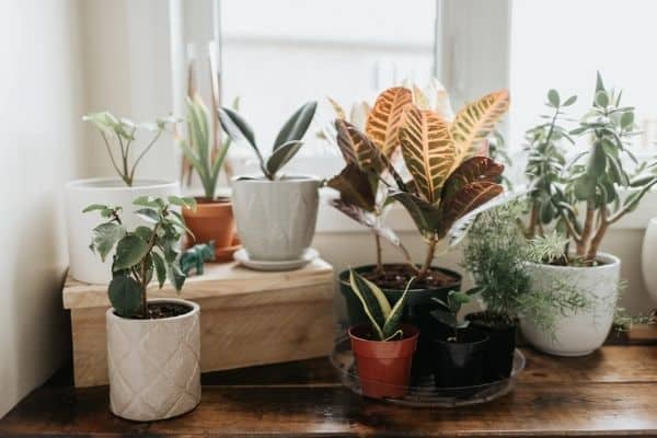 Picture of plants inside the house