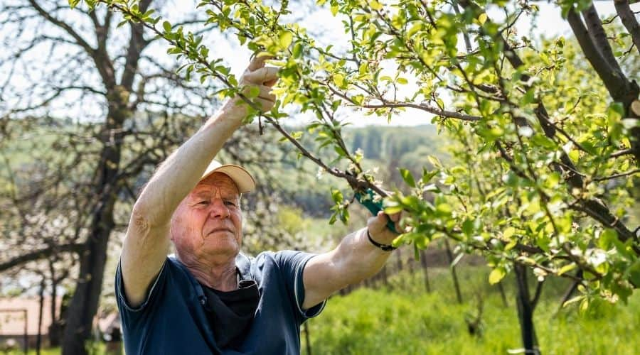 picture of a man pruning a tree
