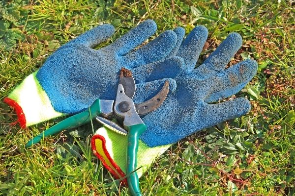 Picture of pruning tools in grass