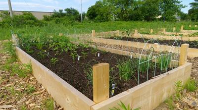 reused compost to fill garden beds