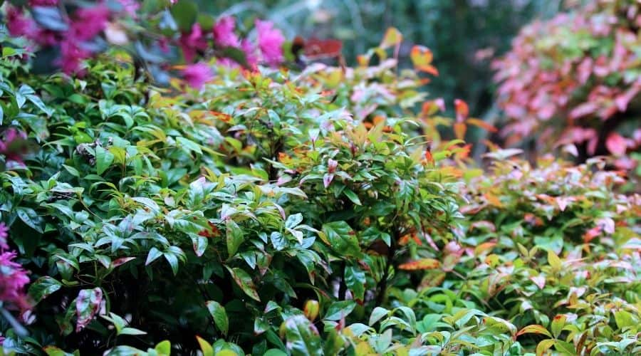picture of leaves of shrub