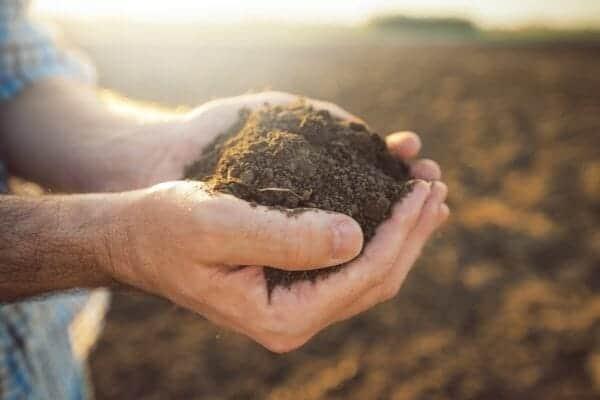 picture of hand full soil