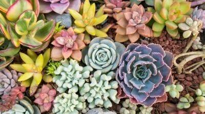 picture of succulent plants