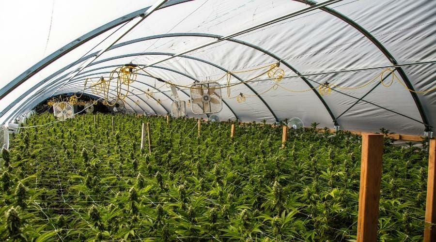 image of a hoop house