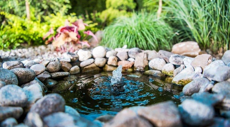 picture of a pond in a garden